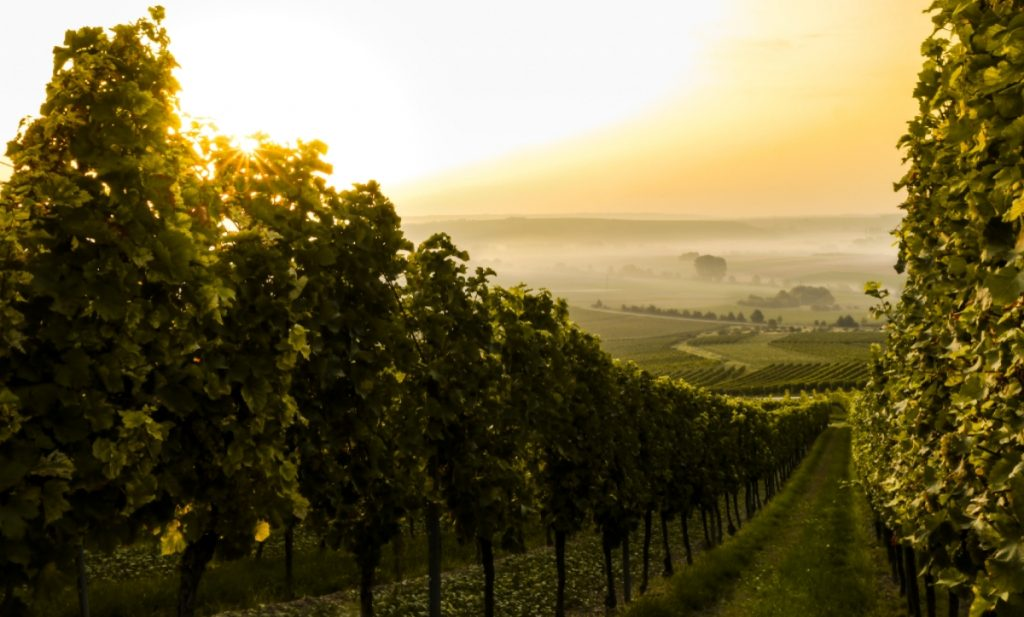 Biodynamic winemaking is all about working with the earth - SECCO Wine Club