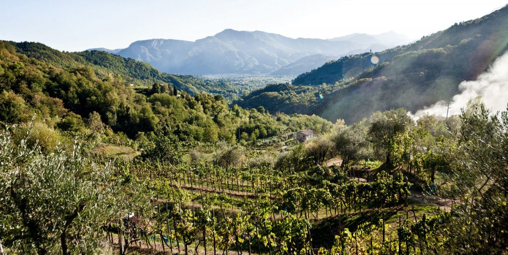 Terroir is all about the location of the vineyard - SECCO Wine Club