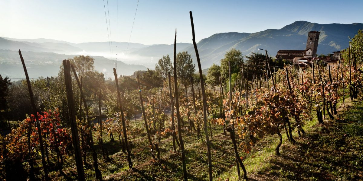 Dry farmed vineyard in Tuscany - SECCO Wine Club