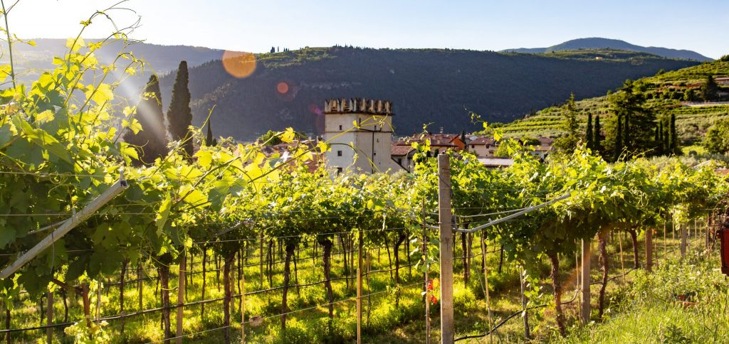 Each vineyard may have a different terroir - SECCO Wine Club